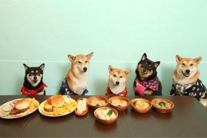 淘宝卖宠物食品需要证吗?如何经营好宠物食品店?
