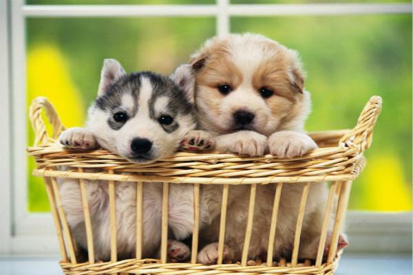 在淘宝开宠物店需要什么证件?淘宝宠物店好做吗?