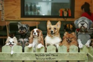 在淘宝开宠物店保证金怎么办?怎么经营淘宝宠物店?